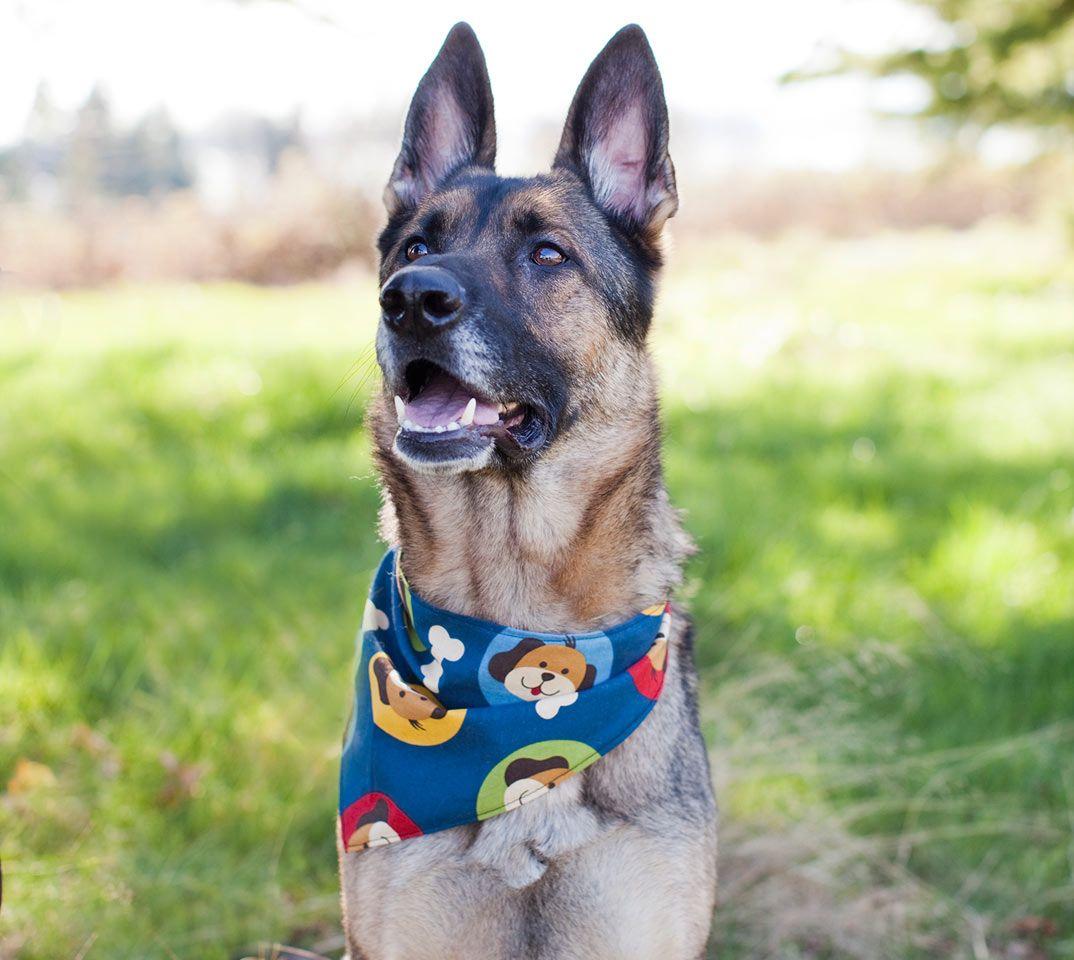 The Local Hound Dog Bandanas Many Made From Used Fabrics Dog