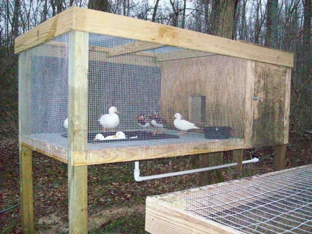 More info on the raised duck pen http www for How to build a duck pen house