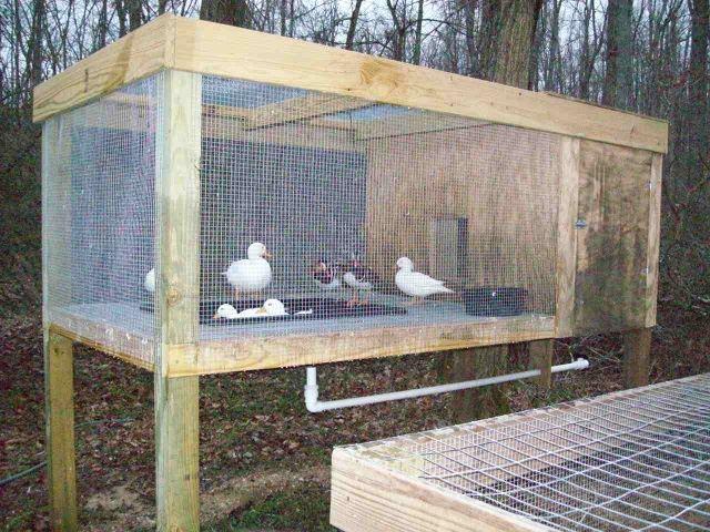 Raised Duck Pen W Plastic Pond And Pvc Drain Photos