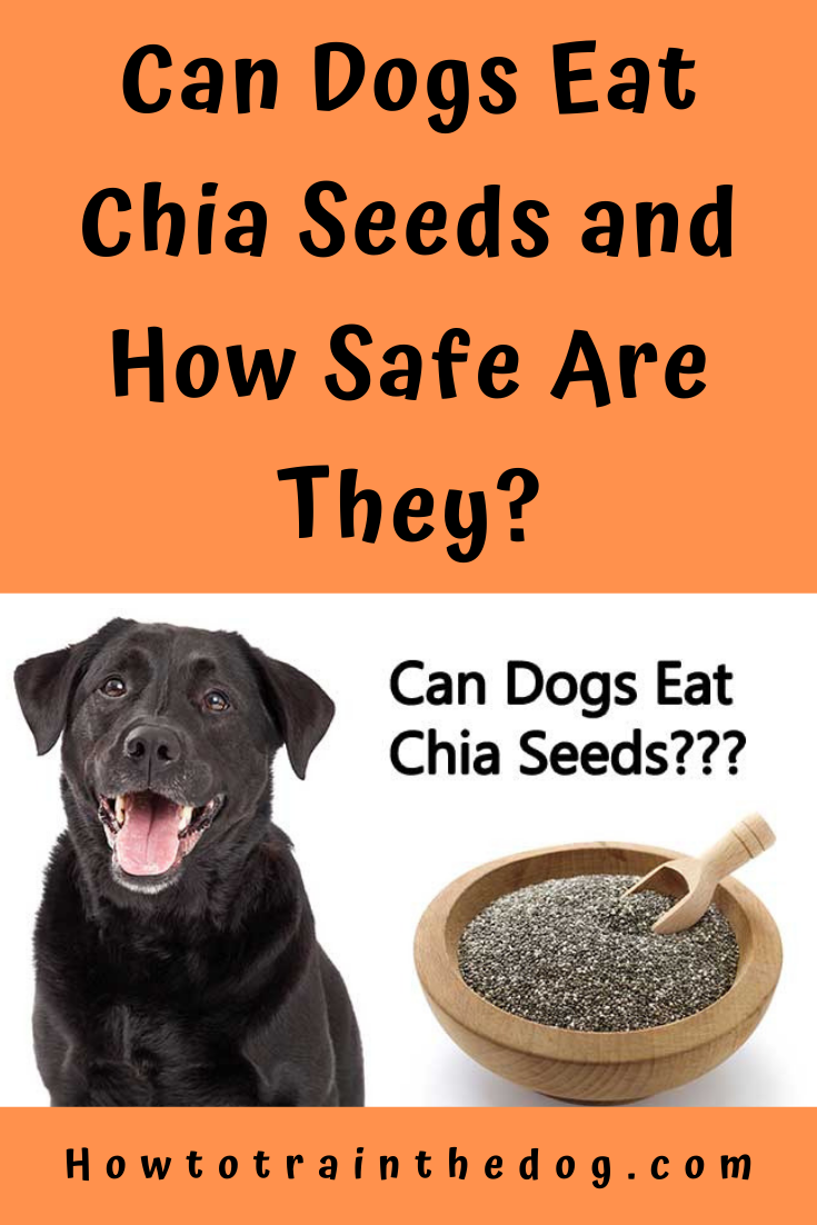 Can Dogs Eat Chia Seeds And How Safe Are They How To Train Your Dog Can Dogs Eat Eating Chia Seeds Dog Eating