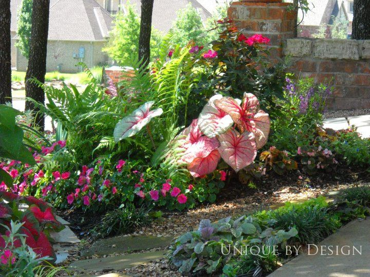 shade bed with caladium ostrich