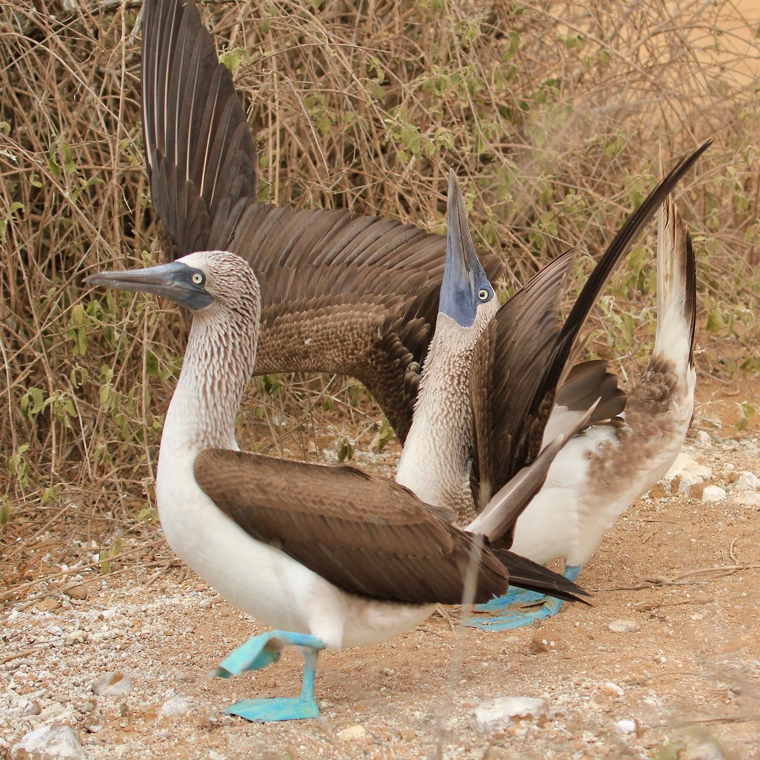 10 Amazing Animals to See in the Galápagos Islands