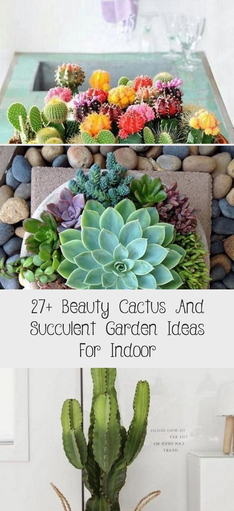 Photo of 27+ Beauty Cactus And Succulent Garden Ideas For Indoor – Backyard İdeas