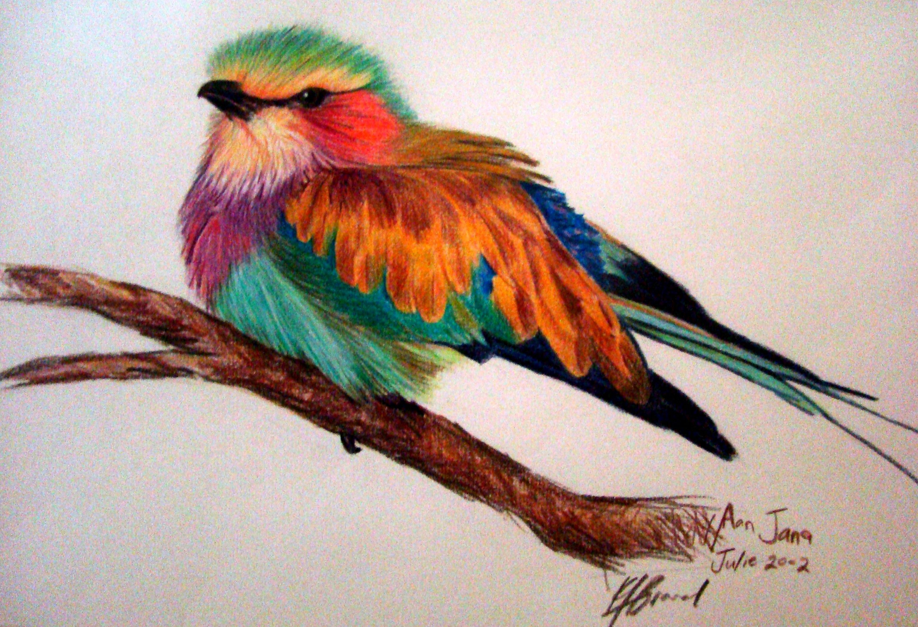 Lilac Breasted Roller Coloured Pencil On Paper With Images