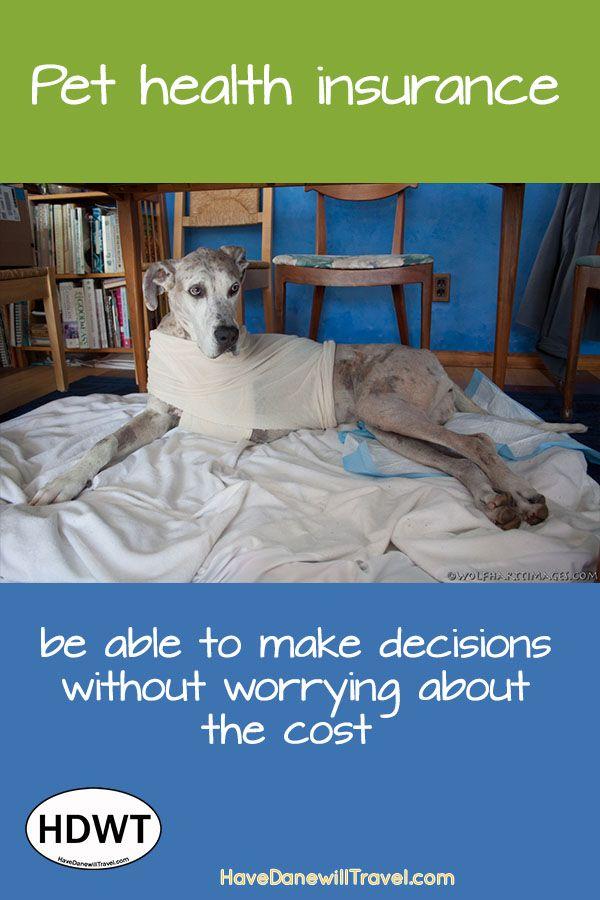 Pet Insurance (augh!) Pet health insurance, Pet