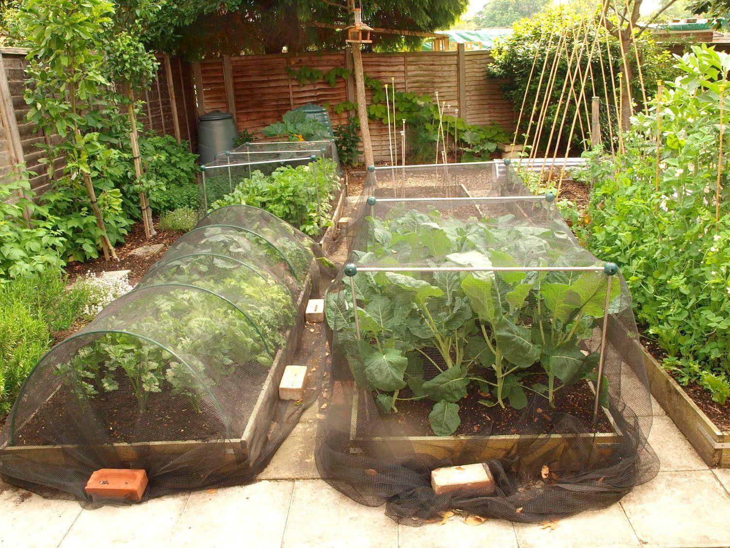 Raised+bed3.JPG 1,502×1,127 pixels Gardening advice