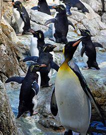 Indianapolis Zoo Zoo Camps