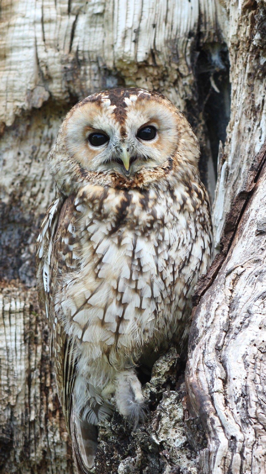 Owls Nest Phone Wallpaper Lockscreen HD 4K Android iOS