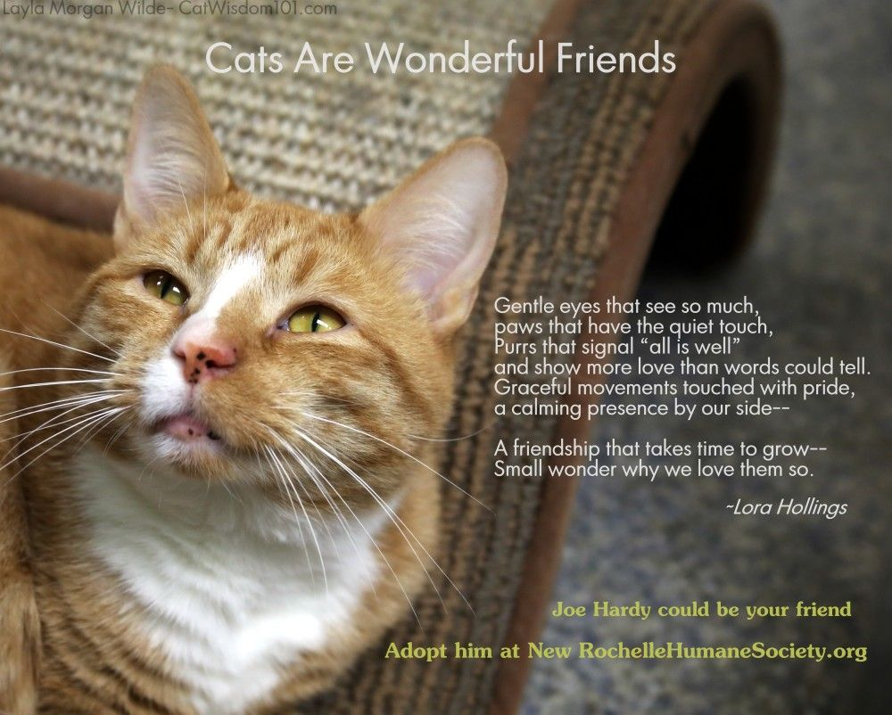 The Poetry Of Shelter Cats Cat Shelter Cats Cat Nyc