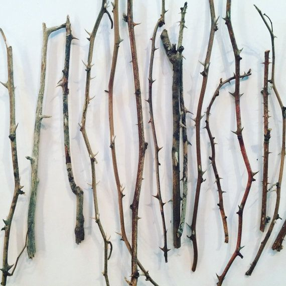 Thorn Branches Dried Rose Stems For Vases And Home Decor Flowers Sticks Vase Thorns