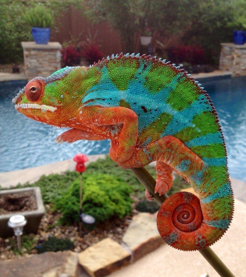 Pin de Wink en karma chameleon   Pinterest   Hermosa