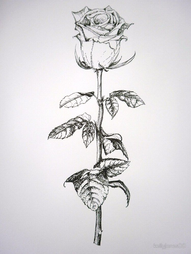 A White Rose On Long Stem By Kellyjones00 Rose Sketch White Rose Tattoos Sketches