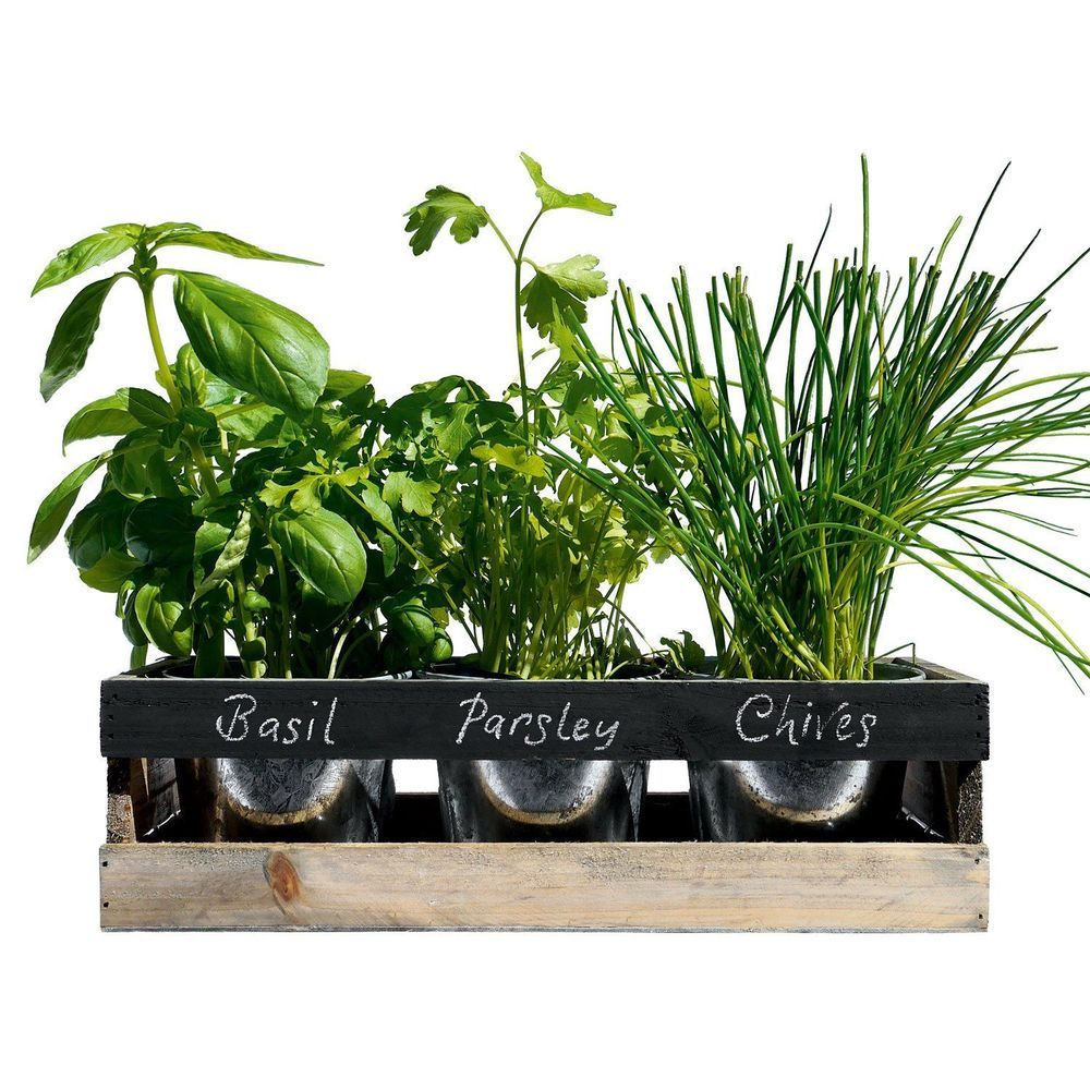 Kitchen Herb Planter Herb Garden Kit Seeds Uk Basil