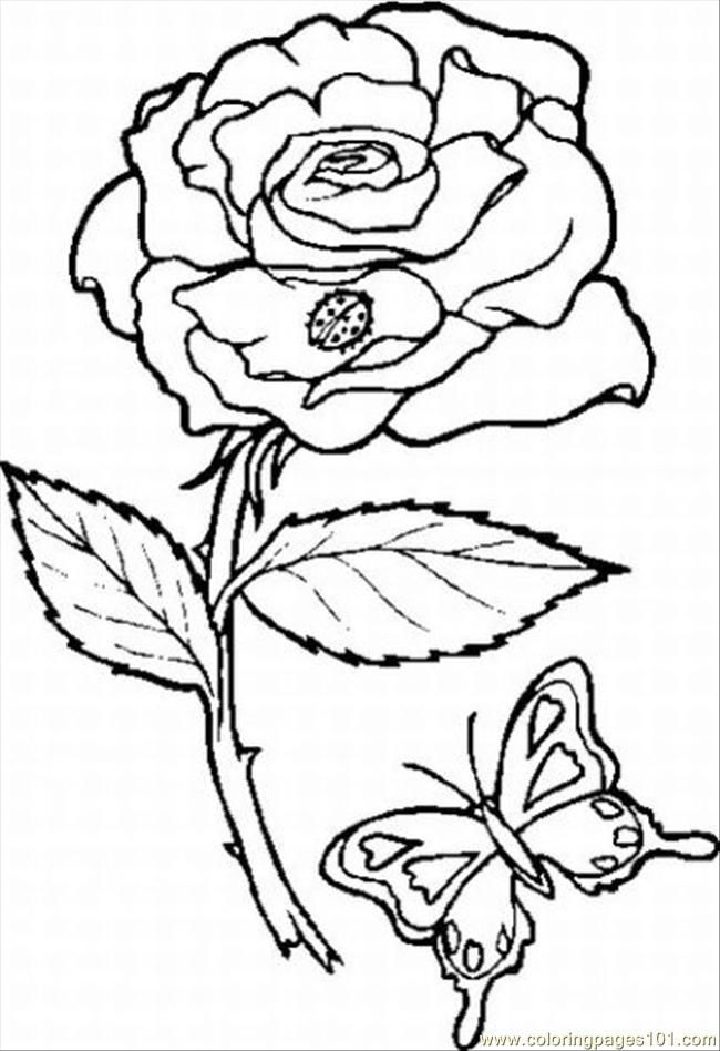Rose 10 Lrg Coloring Page wwwEMB 7 Pinterest Rose