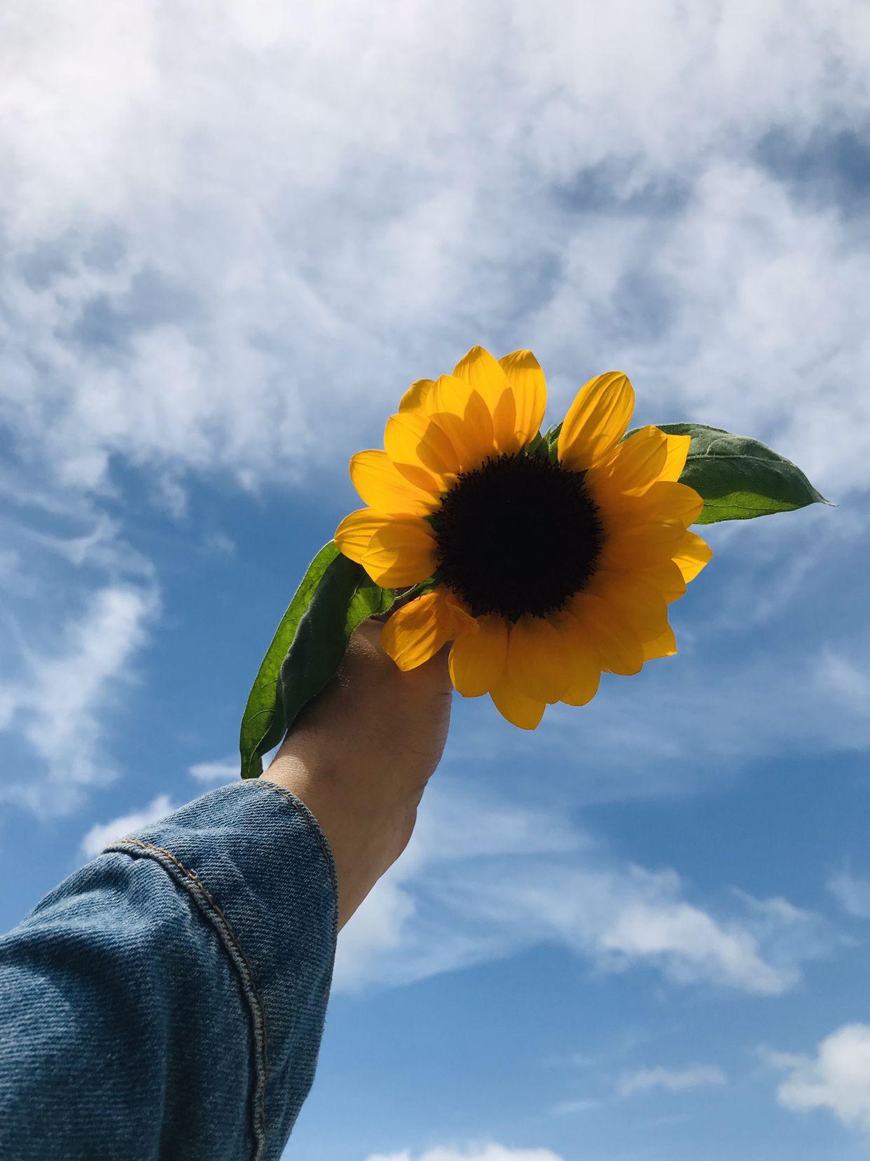 Sunflower Aesthetic Fotografi Fotografi Minimalis Fotografi Kreatif