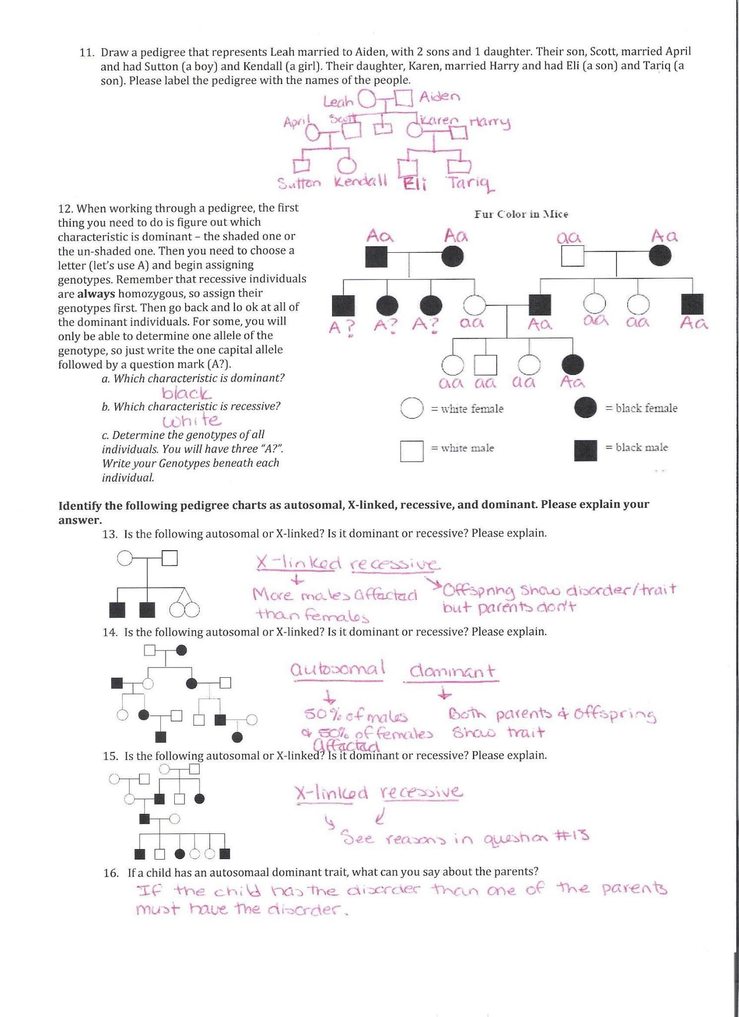 Genetics Pedigree Worksheet Answer Key