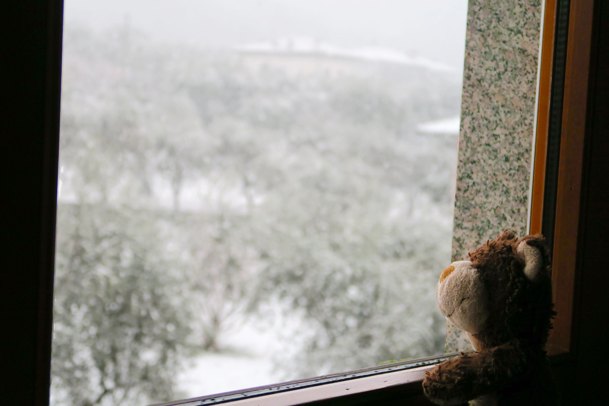 #Arco - Italy - The #bear at the window looking out #snows - orsetto che guarda la neve