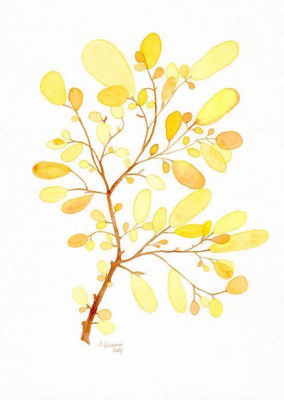 Aquarelle Algue Jaune Reproduction D Une Illustration Botanique