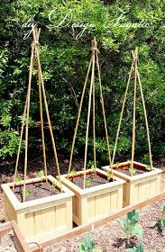 Exactly the way I want to make my bean teepee for my pole beans: bamboo tied with jute and in the corners of the raised box.