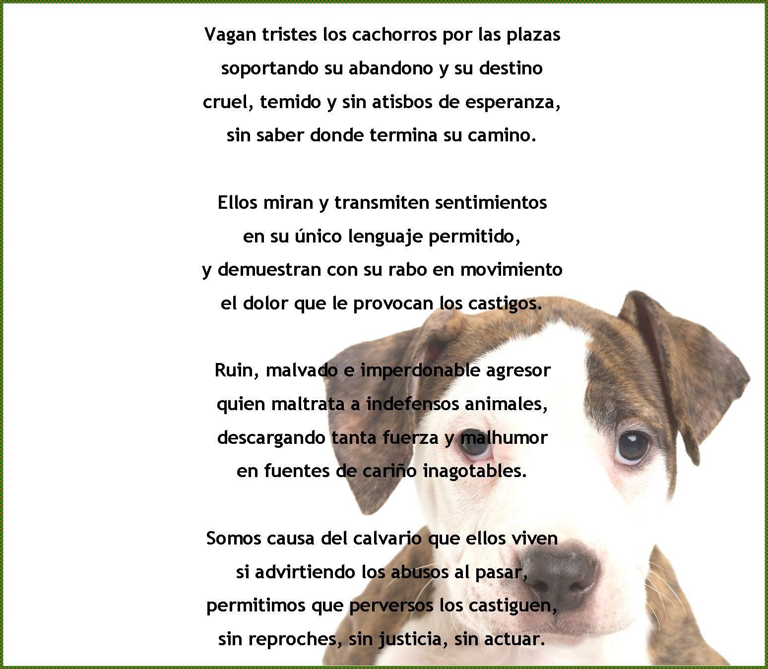 Maltrato Animal Animales Frases Animales Y Dolor