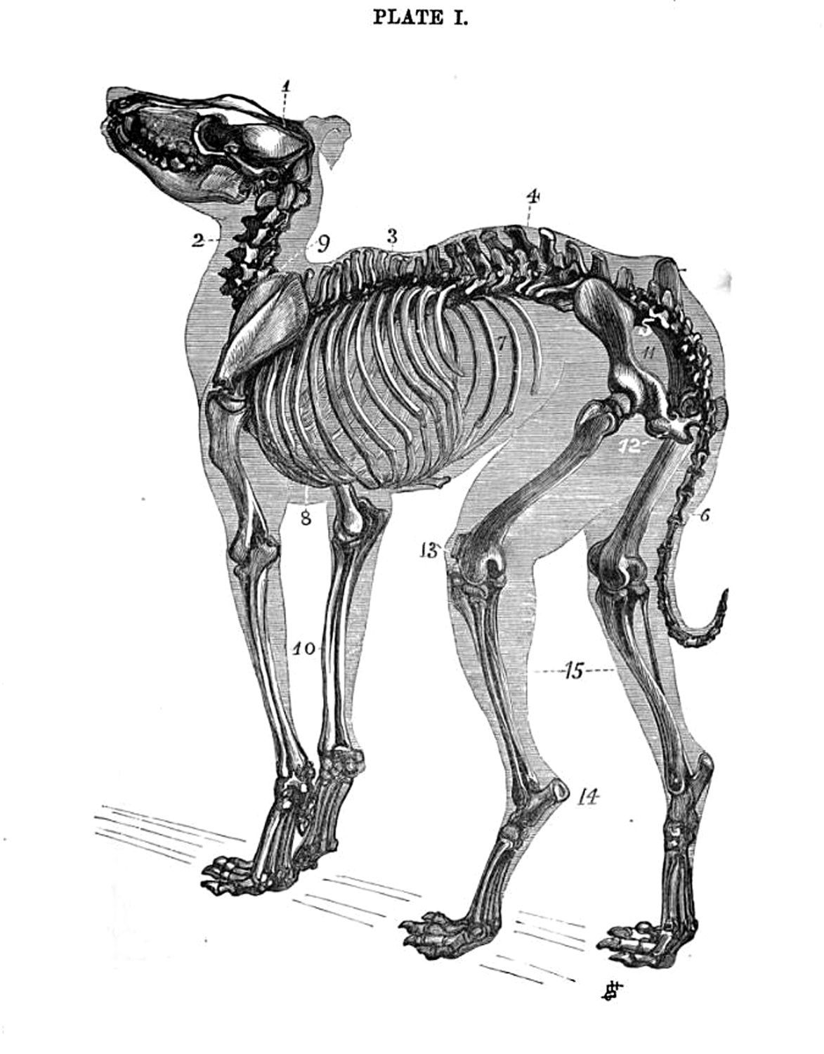 um... this is a cross stitch pattern for a dog skeleton. | Animal ...