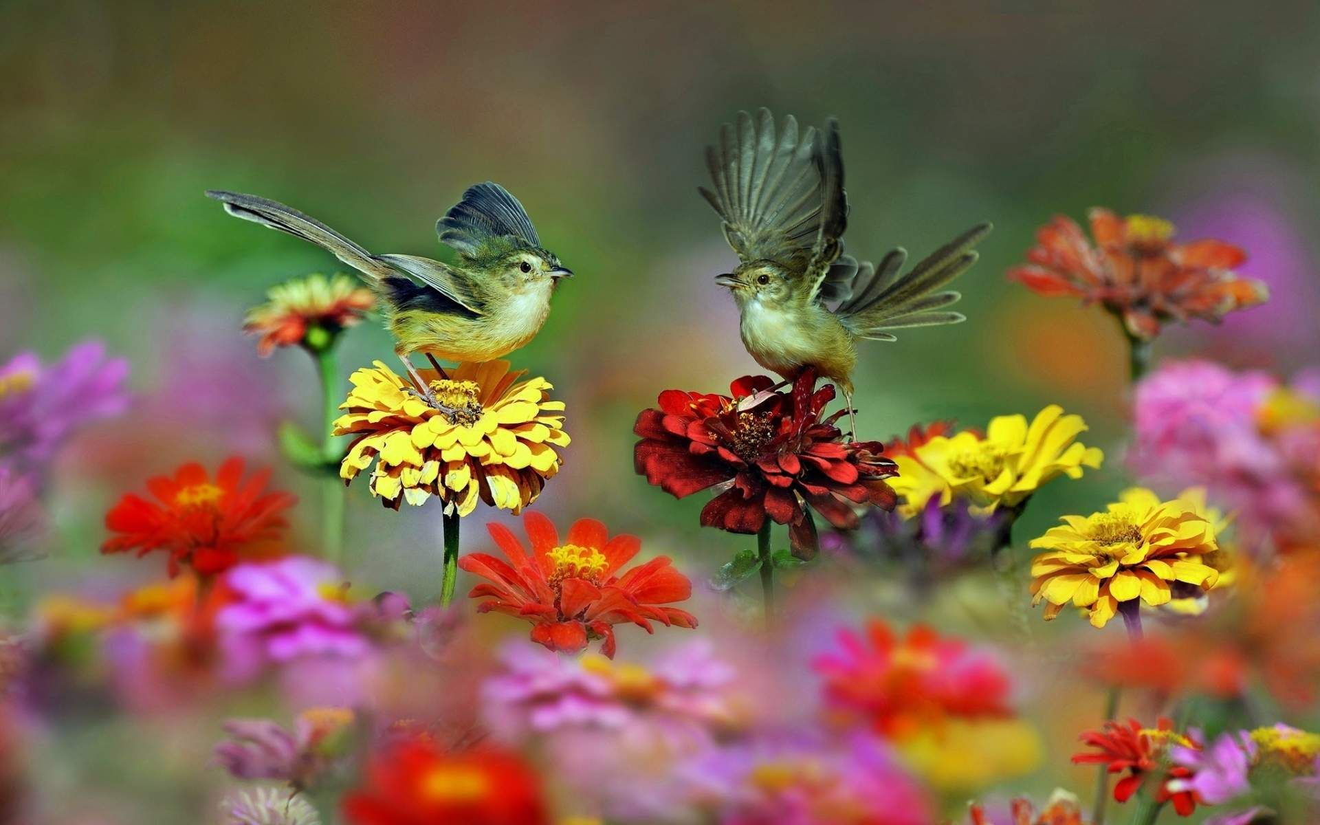 Обои Птичка, семена. Животные foto 10