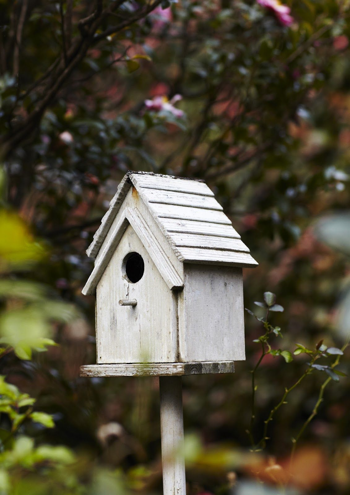 Winter birds Winter garden, Bird houses painted, Bird houses