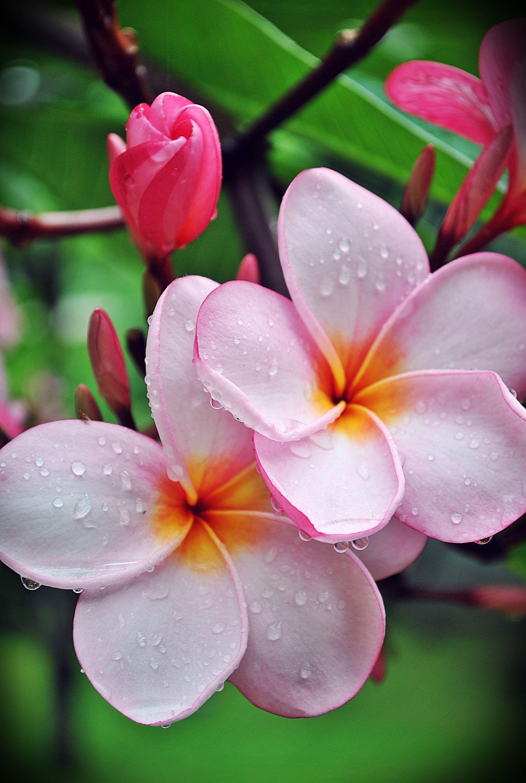 фото экзотических цветов высокого разрешения спн, относящихся