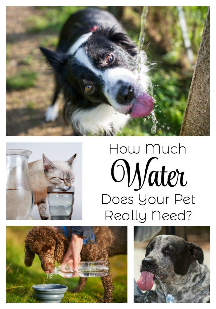How Much Water Does Your Pet Really Need? Pets, Dog care