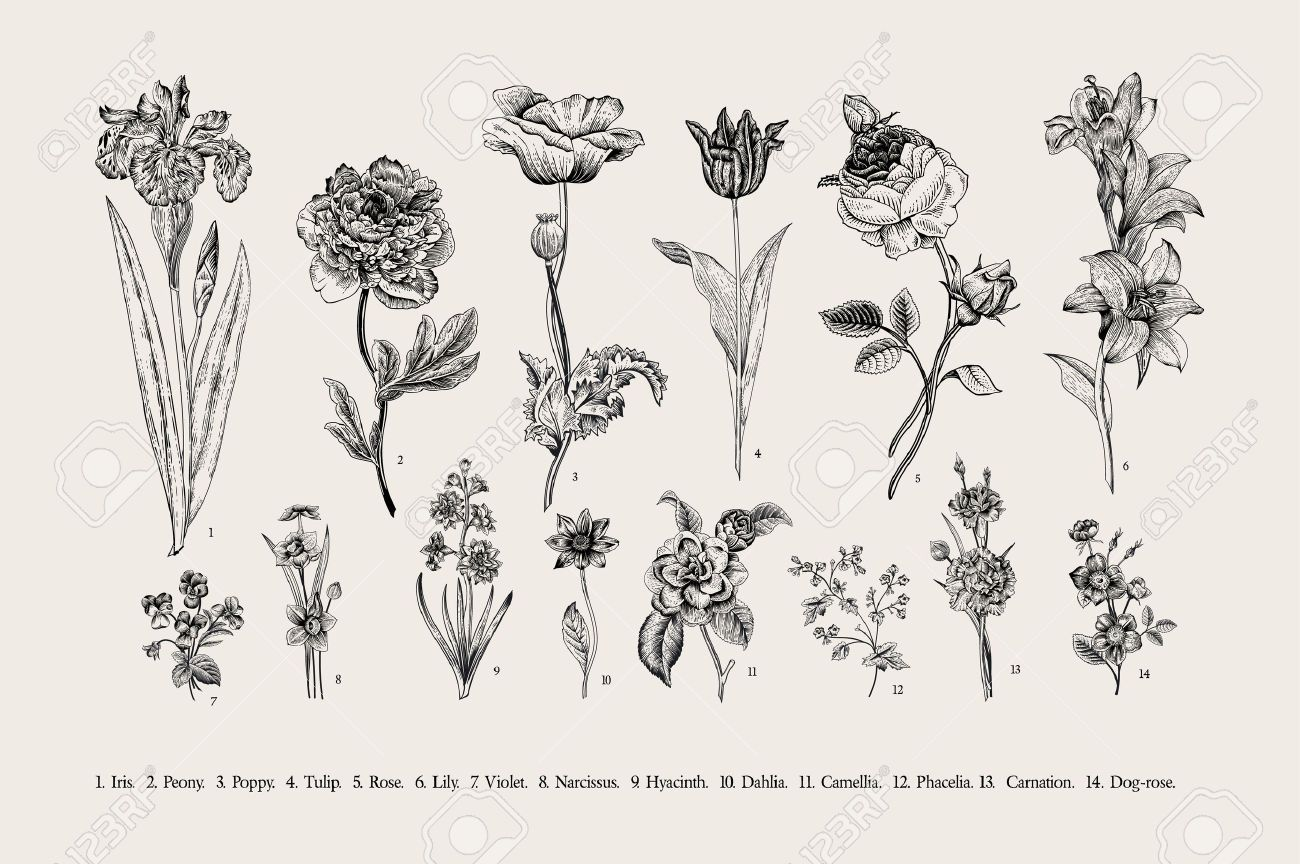Botany Set Vintage Flowers Black And White Illustration In The Style Of Engravings Vintage Flowers Black And White Illustration Flower Illustration