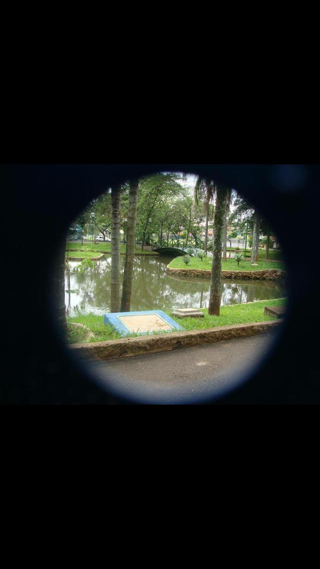 Mata do Ipê