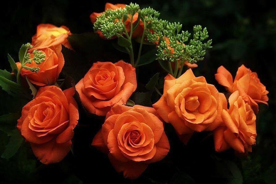 من أعظم الحسرات يوم القيامة أن ترى حسناتك في ميزان غيرك اللهم أني أعوذ بك من شر لساني Rose Orange Roses Birthday Month Flowers