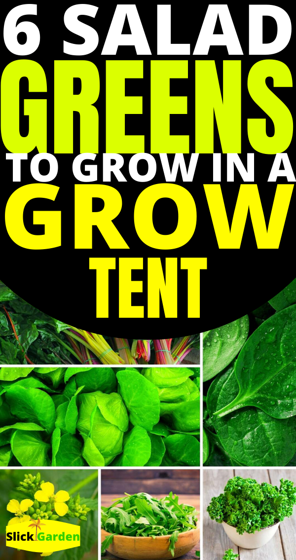 20 Easy Vegetables To Grow In Grow Tent In 2020 Easy 400 x 300