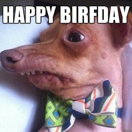 birthday dog meme pics | funny wallpaper | Pinterest ...