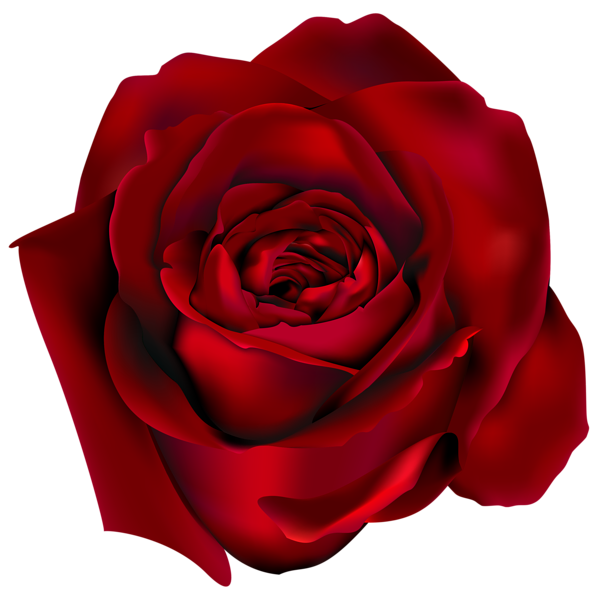 Pin By Darlene Conard On Flowers Pinterest Red Rose Png Rose