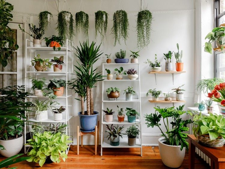 Keep Indoor Plants Alive With These NonBasic Tips — Architectural Digest is part of Room with plants, Indoor plants, Plant decor, Plants, Interior plants, Houseplants decor - Think you've killed your indoor plants  Here's your guide to becoming plant parent of the year