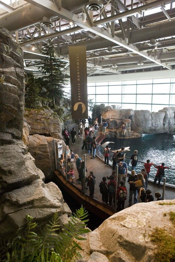 Shedd Aquarium Oceanarium..This show with the balugas and dolphins was so cool!