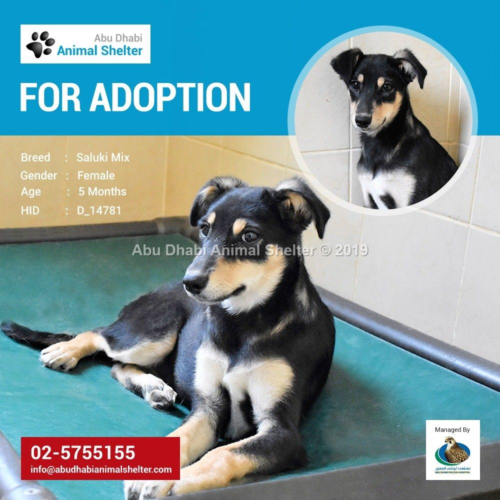 This sweet puppy is seeking her forever home! Adopt her as