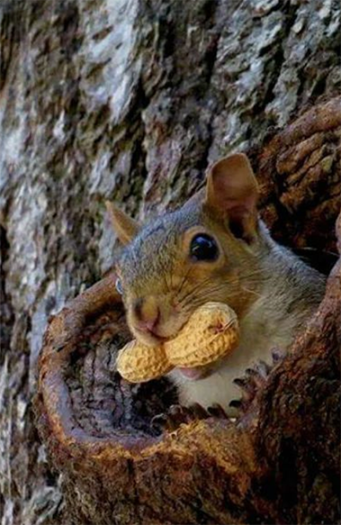 With All This Rain You May Hear Increased Squirrel Acitivty Above Your Head In The Attic Call Us Now For A Free Cute Squirrel Animals Beautiful Baby Animals