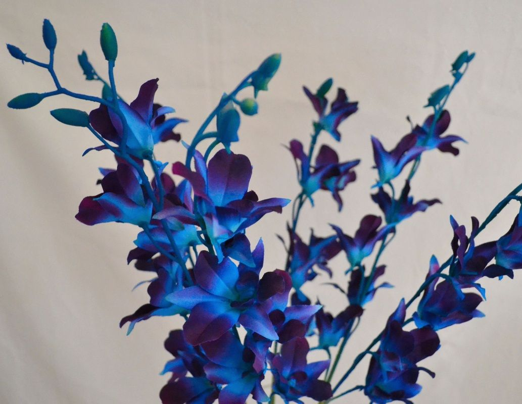 Orchids just fake it bouquets flowers pinterest orchid premium artificial orchids including our exclusive hand dyed blue galaxy orchids izmirmasajfo Gallery
