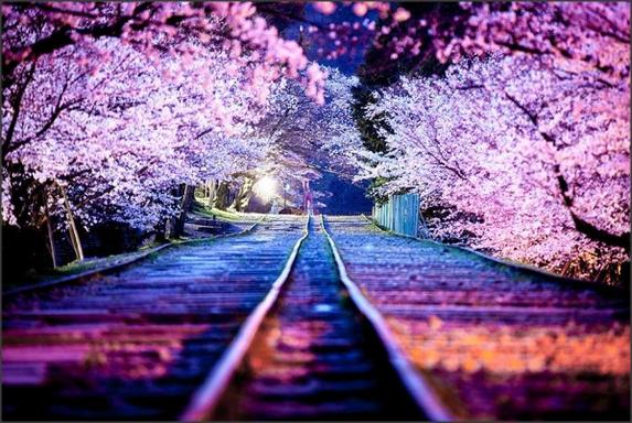 Fantastis 30 Wallpaper Bunga Sakura Hidup Gambar Wallpaper Bunga Sakura Bergerak Anda Semua Tentunya Ingin Mempunyai Di 2020 Pemandangan Bunga Sakura Fotografi Alam