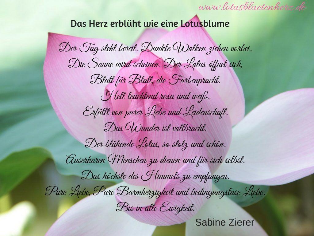 Das Herz erblüht wie eine Lotusblume