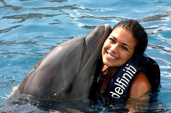 Escursione Nuotare Con I Delfini A Sharm El Sheikh Escursione