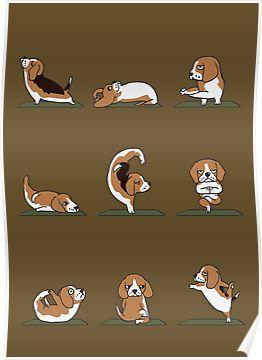 Beagle Yoga Poster By Huebucket Beagle Art Beagle Funny Cute
