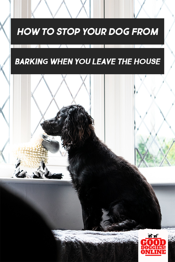 How To Stop A Dog From Barking When You Leave House Good Doggies Online Dog Training Obedience Dog Training Your Dog