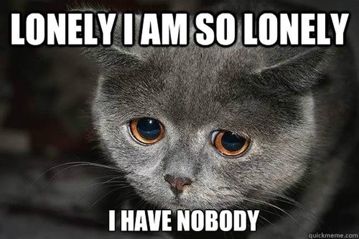 Funny Memes To Cheer Up A Friend : Animal memes that perfectly describe your sad single life