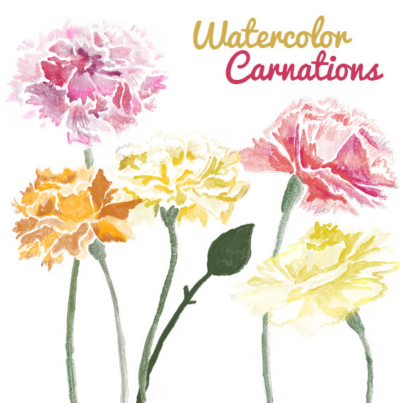 Watercolor Carnation Flower Clip Art For Scrapbooking Instant