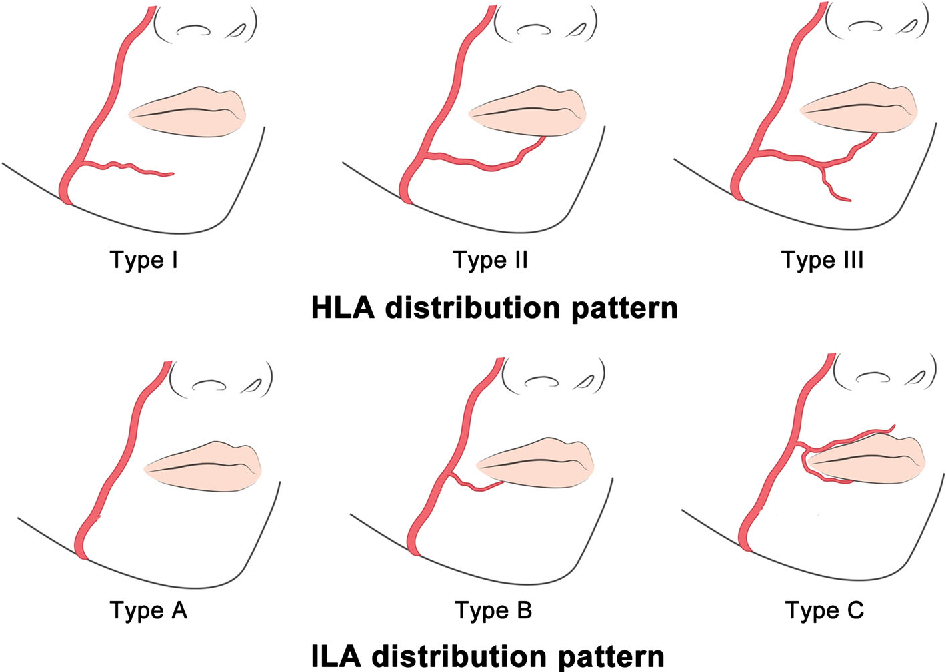 Image result for lip anatomy | Hair and beauty | Pinterest | Anatomy ...
