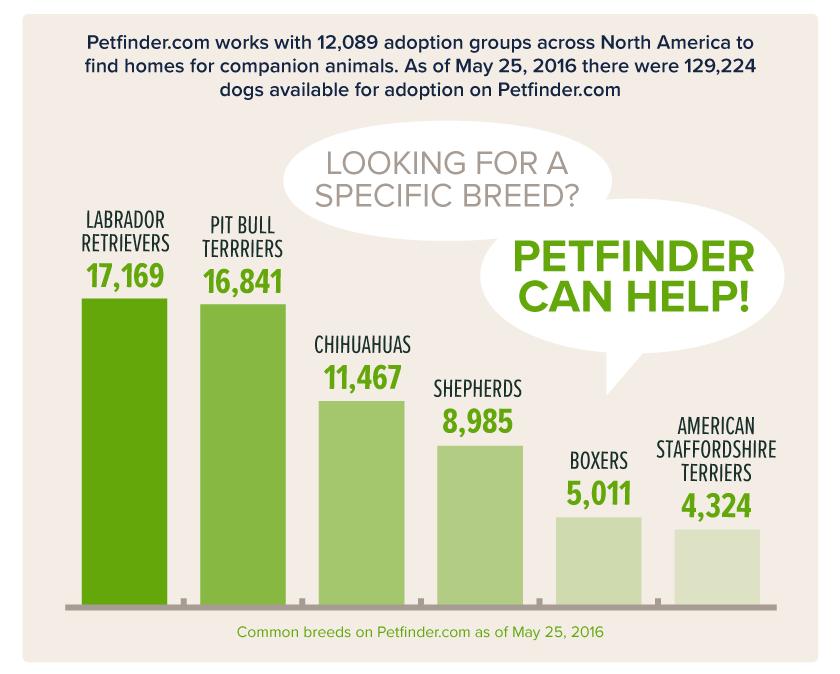 Pet Adoption Statistics: The Numbers Behind the Need #petadoption