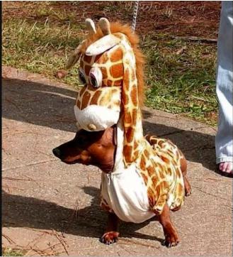 smallest little giraffe costume ever!
